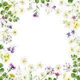 Watercolor frame of wild flowers and herbs on a white background. For greetings and invitations - 247285792