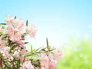Spring flowers of pink color and green leaves