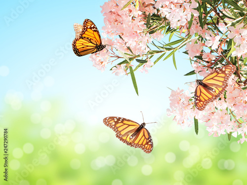 Pink flowers and monarch butterflies - 247290784