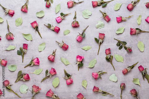 Flowers valentine day composition. Frame made of pink rose on gray background. Flat lay, top view, copy space. - 247330151