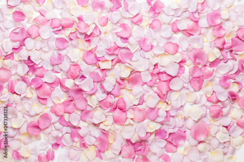Foto Murales Pink rose flowers petals on white background. Flat lay, top view, copy space.