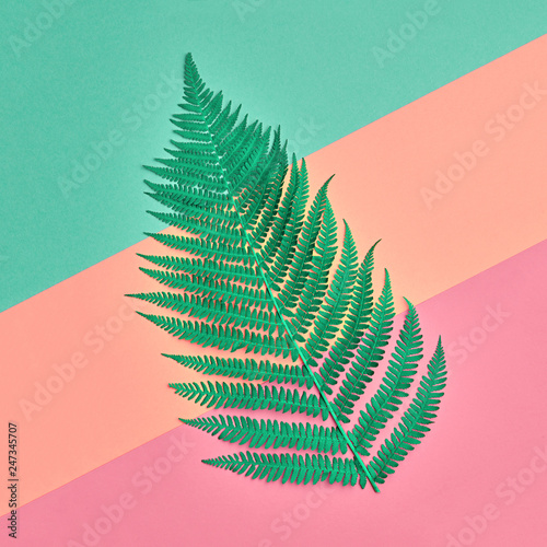 Floral Leaves Fashion Concept. Fern Tropical Green Leaf. Vivid Design. Art Gallery. Creative Bright Color. Minimal Style. Summer fashionable Background. Flat lay