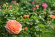 Garten 842
