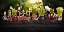 "Постер, картина, фотообои ""Gardening Tools and Plants. Spring Garden Works Concept"""