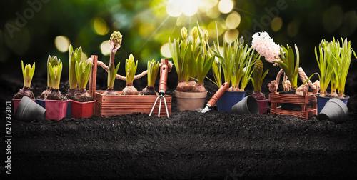 Leinwandbild Motiv Gardening Tools and Plants. Spring Garden Works Concept