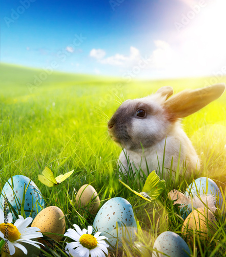 Leinwandbild Motiv April Easter bunny; baby rabbit and easter eggs on spring flower