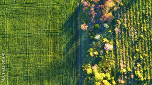 Foto Murales Aerial view at the garden and field. Agricultural landscape from air. Field and garden. Farm at summer time. Drone photography. Field and garden-image