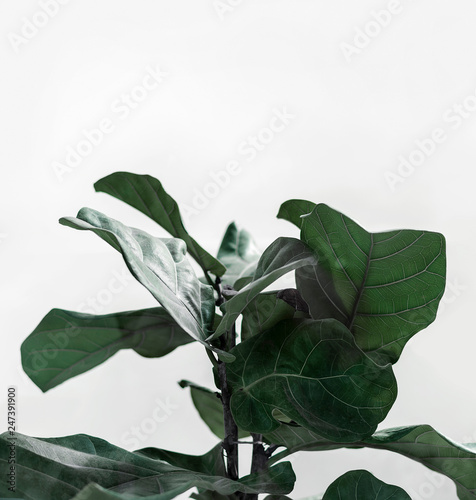 leaves decorating for composition design. Leaf texture with white background