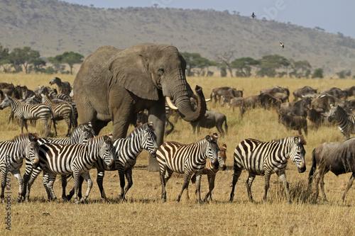 The Great migration, Serengeti National Park, Tanzania © bayazed