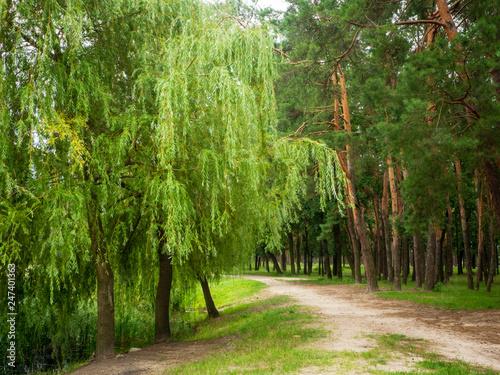 Pryshchuk A.V. - 247401363