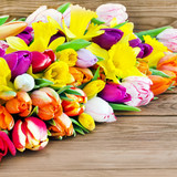 Tulips and daffodils against wooden background - 247405112