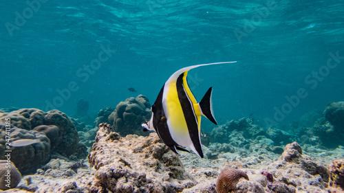 Malediven Unterwasserwelt