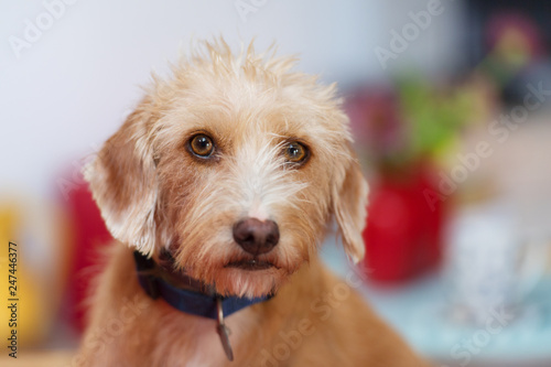 Portriat little cross breed dog - 247446377