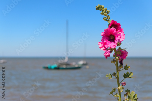 Boat in the sea with Hollyhocks
