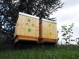 Bees flying into two wooden hives on a sunny day