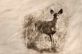 Sketch of a Deer Stepping Out From The Tall Dried Marsh Grass - 247470597