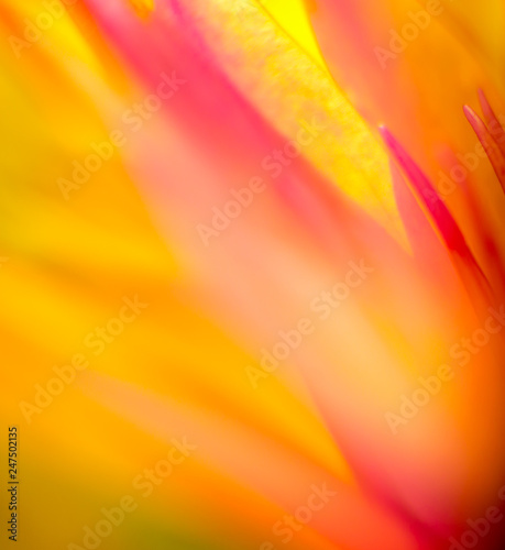 Abstract colored background close up. Macro. - 247502135