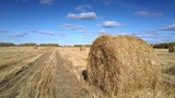 large dry straw roll lies on foreground in empty gold harvested field against boundless sky with clouds - 247524708
