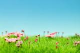 Fototapeta Fototapety z naturą - Landschaft mit Blumen im Frühling vor Himmel © Robert Kneschke
