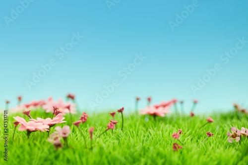 Landschaft mit Blumen im Frühling vor Himmel