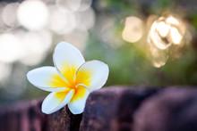 "Постер, картина, фотообои ""Frangipani flowers select background"""
