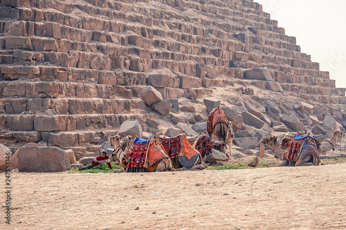 .18/11/2018 Cairo, Egypt, camping camps resting near the pyramids on a hot day after tourists