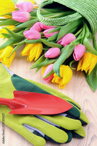 Leinwandbild Motiv Bunch of Tulips in green basket. table with garden gloves and shovel