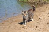 wild gray cat on the beach