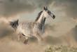 Beautiful arabian horse in the dust running