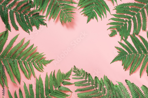 Border leaves of fern on pastel pink. Top view with copy space. Summer background.