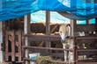 Horses on the Farm.Thailand.