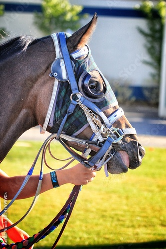 Horse Racing Details