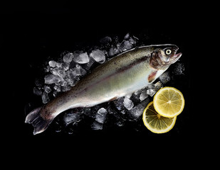 fresh raw rainbow trout in ice with lemon on black background