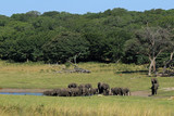 Elephants, Hwange National Park, Zimbabwe