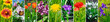 Blooming peonies, dandelions and other spring flowers. Panoramic collage. Wide image.