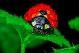 Beautiful ladybug on leaf defocused background - 247665569
