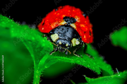 Beautiful ladybug on leaf defocused background © blackdiamond67