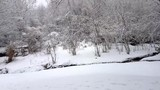 Walk in the snow forest - 247677173