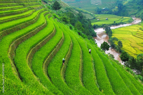 fototapeta na ścianę Rice field at Mu Cang Chai, Vietnam