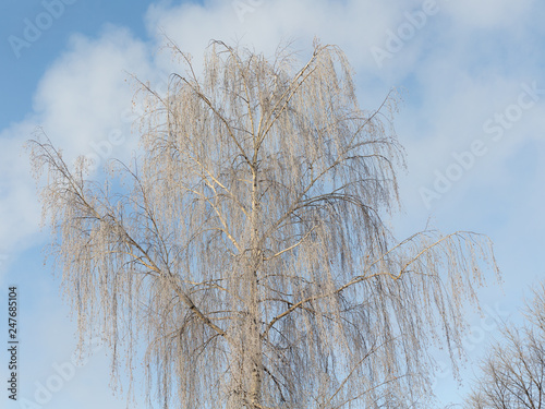 hoarfrost on a cold winter day - 247685104