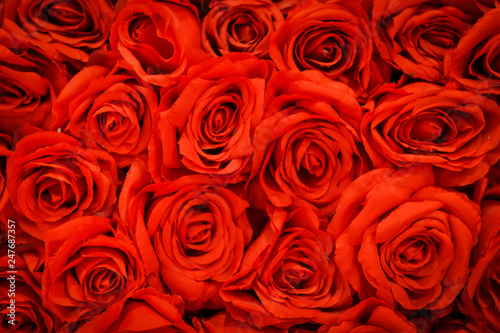 fototapeta na ścianę Romantic red natural roses background