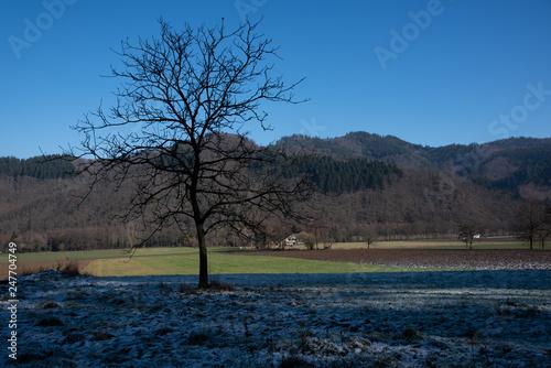 Vorfrühling im Schwarzwald