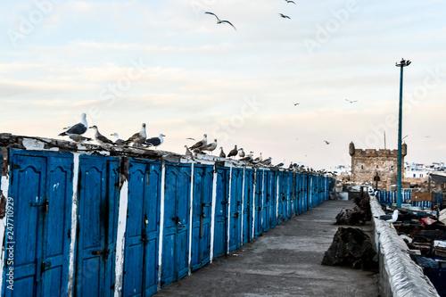 view of Essaouira City of Morocco Africa