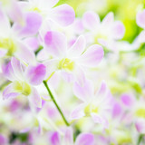 Beautiful pale pink orchid flowers in tropical garden - 247719321