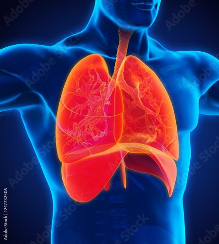 Leinwanddruck Bild Human Respiratory System Illustration