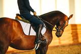 equestrian horse training  - 247733580