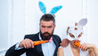 Happy easter and funny easter day. Surprised bunny couple wearing bunny ears and eat carrot. Smile easter.