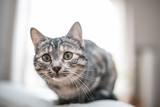 Katze sitzt auf dem Sofa - 247743123