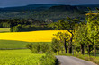 Leinwanddruck Bild - Rapsfelder, Blick auf den Lilienstein,  Nationalpark Saechsische Schweiz, Elbsandsteingebirge, Sachsen, Deutschland