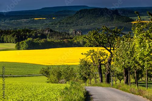 Leinwanddruck Bild Rapsfelder, Blick auf den Lilienstein,  Nationalpark Saechsische Schweiz, Elbsandsteingebirge, Sachsen, Deutschland